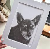 Chihuahua Drawing by Rachel Baker Artist