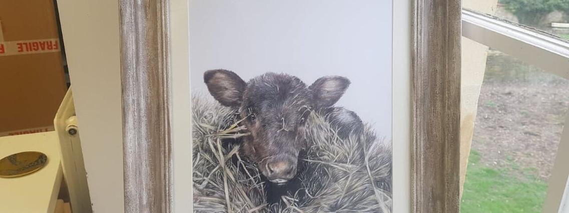 Calf by Rachel Baker Artist