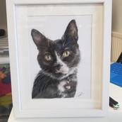 Cat Drawing Rachel Baker Artist
