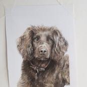 Spaniel Drawing Rachel Baker Artist