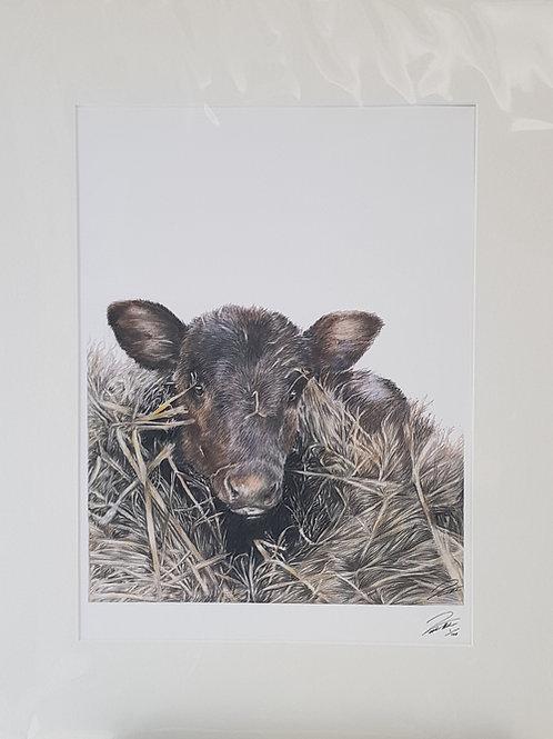 Calf Mounted Print