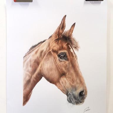 Horse Darwing Rachel Baker Artist