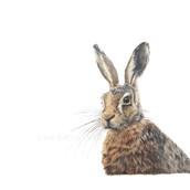 Hare Drawign Rachel Baker Artist