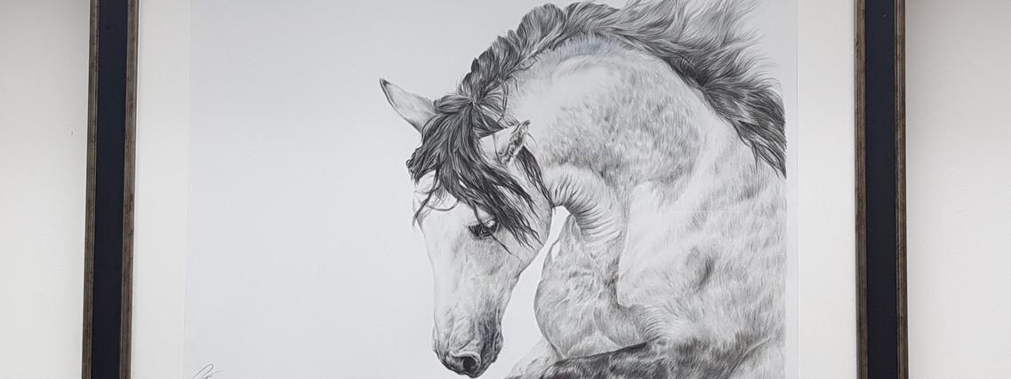Galloping Grey by Rachel Baker Artist