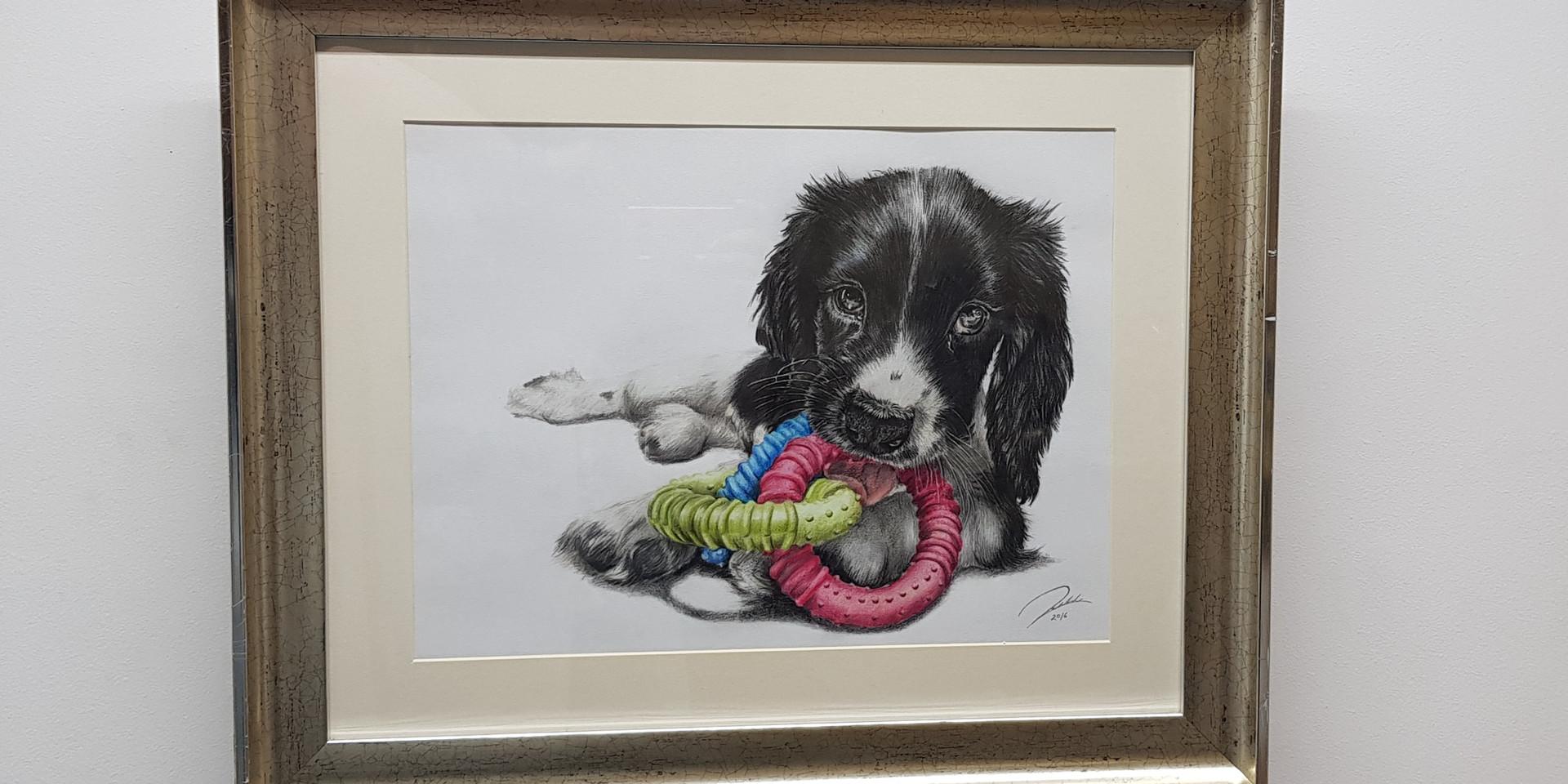 Springer Puppy by Rachel Baker Artist