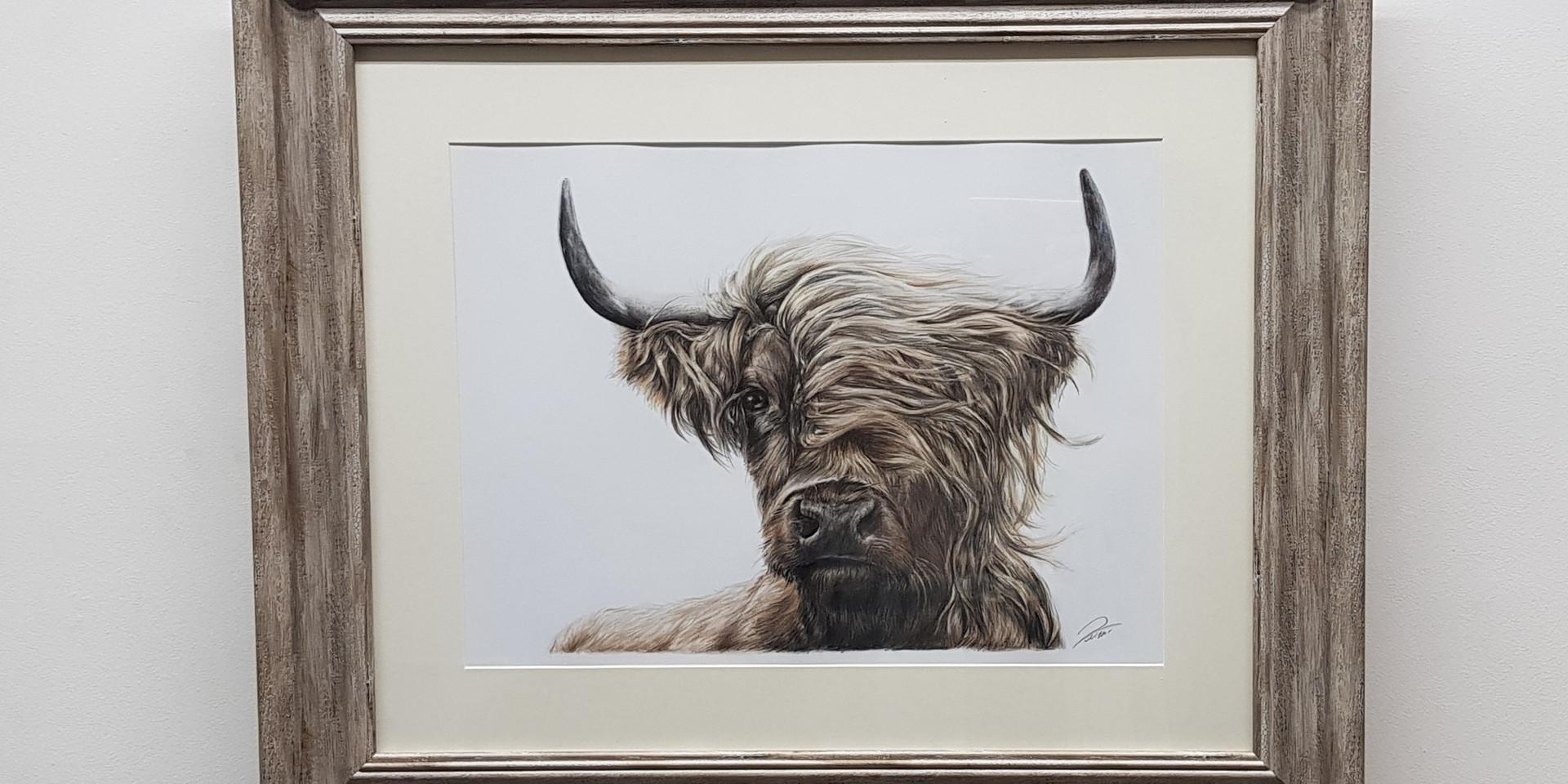 Highland Cattle by Rachel Baker Artist