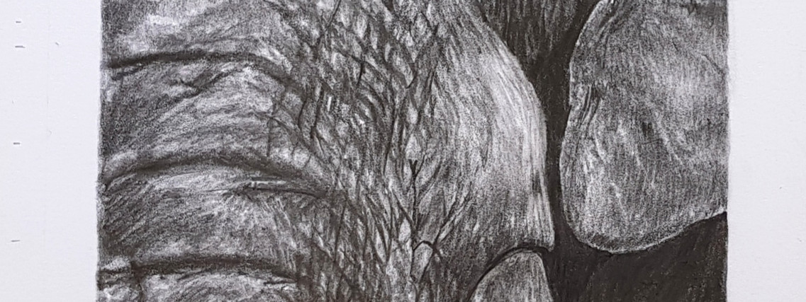 Wild series Elelphant by Rachel Baker Artist