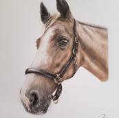 Horse Drawing Rachel Baker Artist