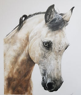 Horse Portrait by Rachel Baker Artist