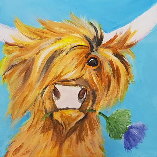 Higland Cow.jpg