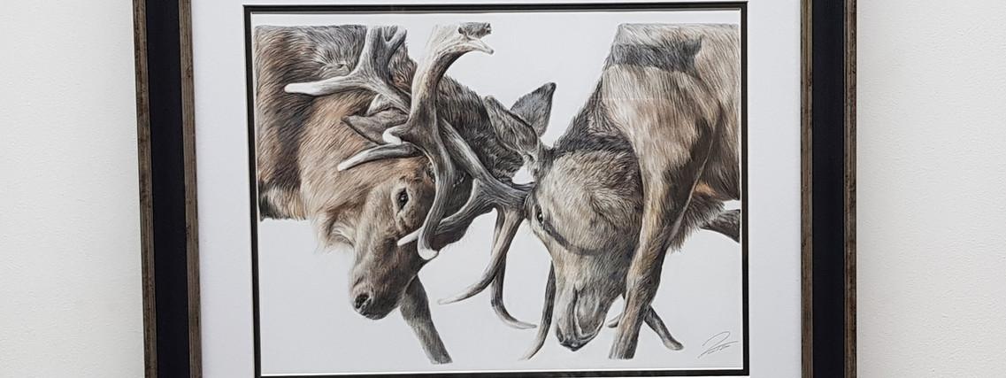 Locking Antlers by Rachel Baker Artist