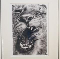 Lion Print (Wild Series)