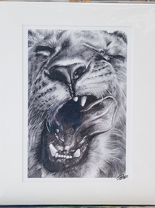 Lion Mounted Print