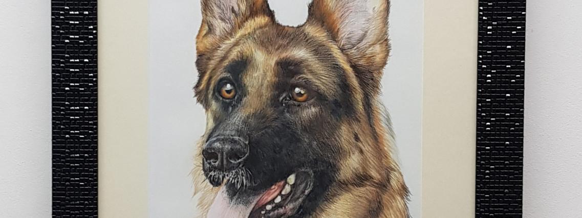 German Shepard by Rachel Baker Artist