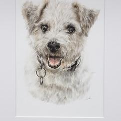 Dog Drawing Pet portrait artist Rachel Baker Artist