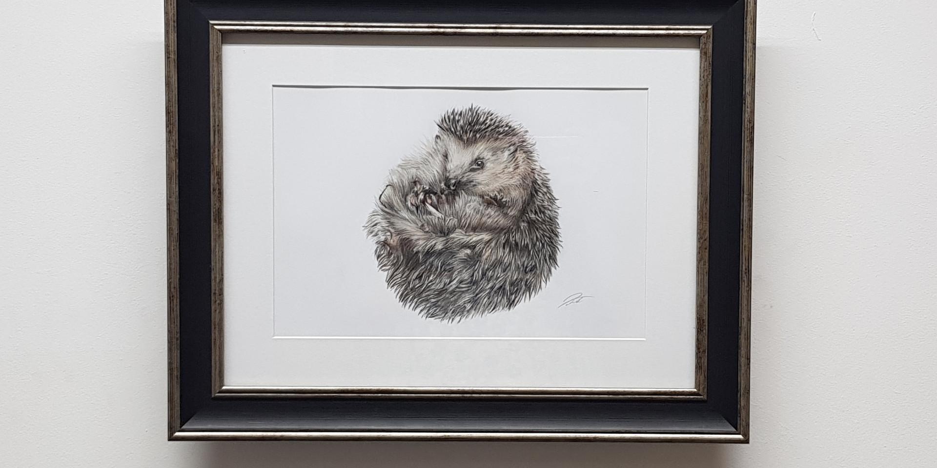 Spike The Hedgehog by Rachel Baker Artist