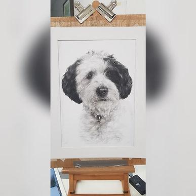 Dog Drawing Pet Portrait