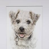 Pet Portrait By Rachel Baker Artist
