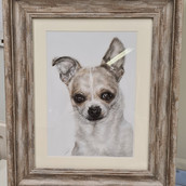 Chihuahua Portrait by Rachel Baker Artis