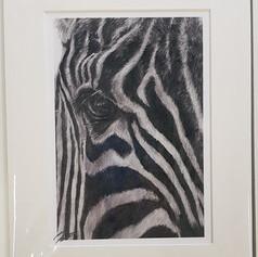 Zebra Print (Wild Series)