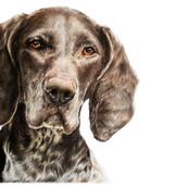 Pet Portrait Rachel Baker Artist