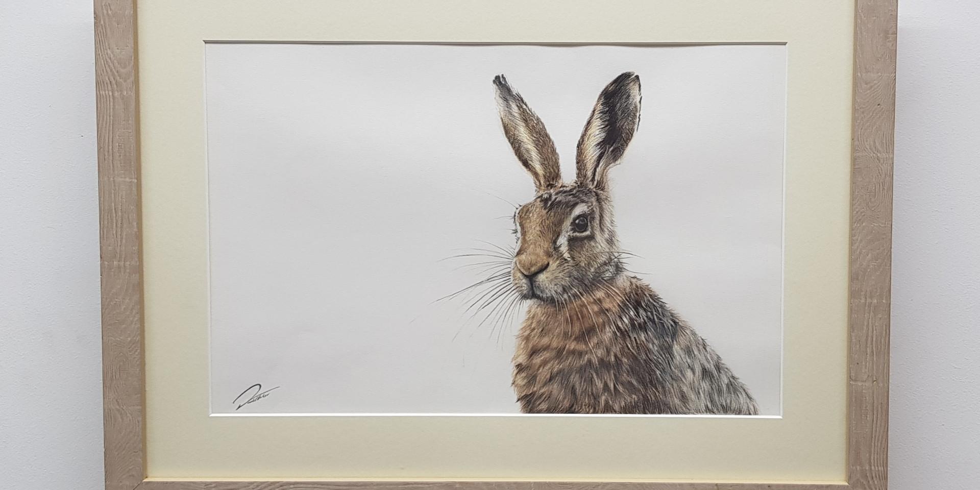 Spring Hare by Rachel Baker Artist