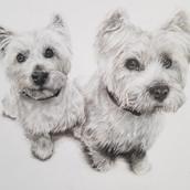 Westies Drawing Rachel Baker Artist