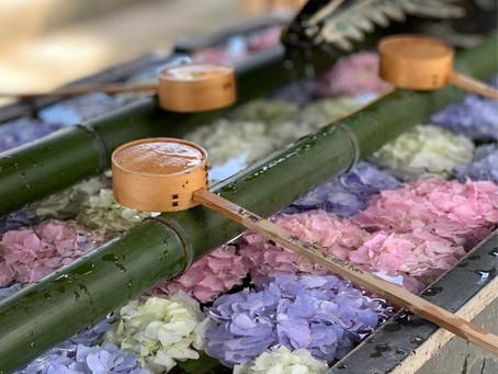 京都西山の紫陽花を訪ねて@柳谷観音