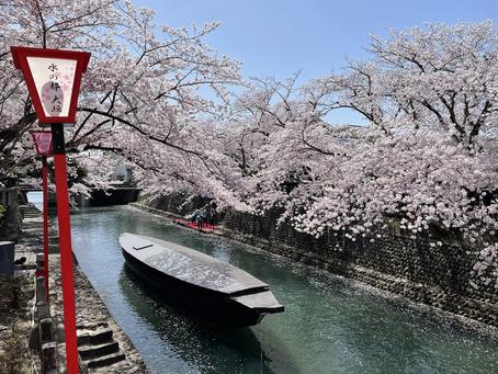 大垣船町川湊の桜を両親と@奥の細道むすびの地記念館前