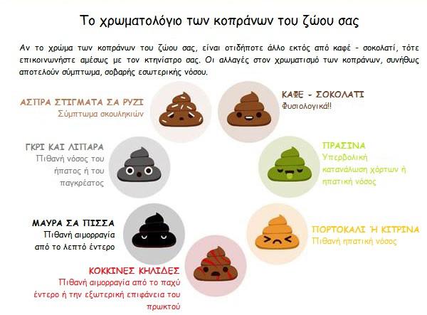 Το χρωματολόγιο των κοπράνων του ζώου σας