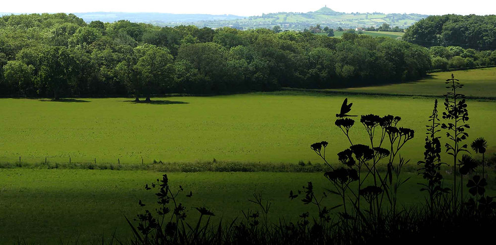 somerset-landscape-v4.jpg
