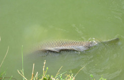 cew-fishing-118.jpg