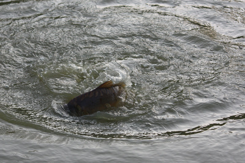 fishing+038.jpg