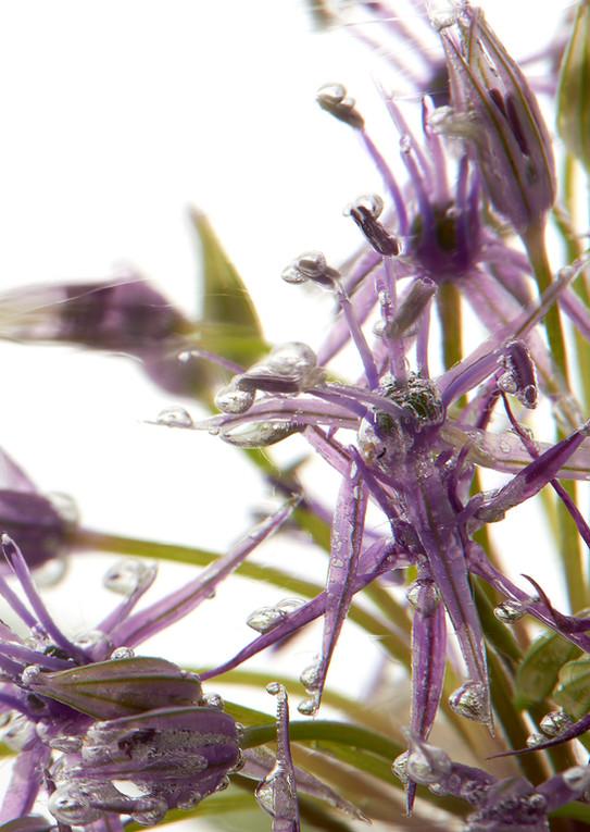 Blumen 0049 1.jpg