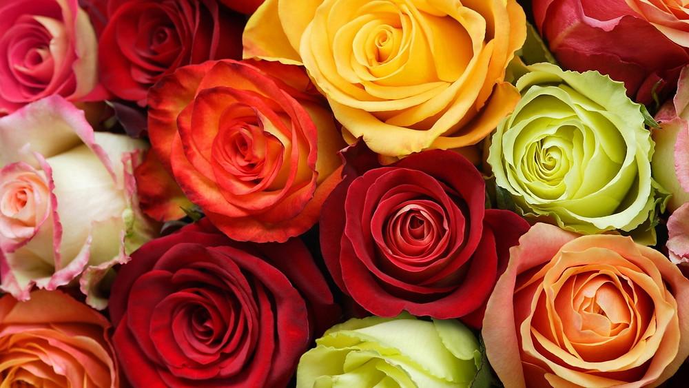 mixed roses.jpg