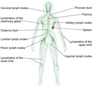 Lymphatic Drainage Therapy Part 1