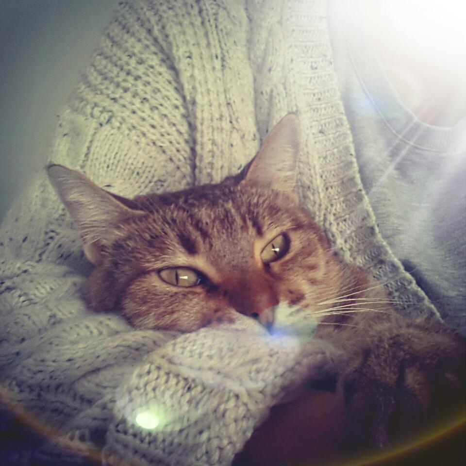 Cats, Sitges, animals association