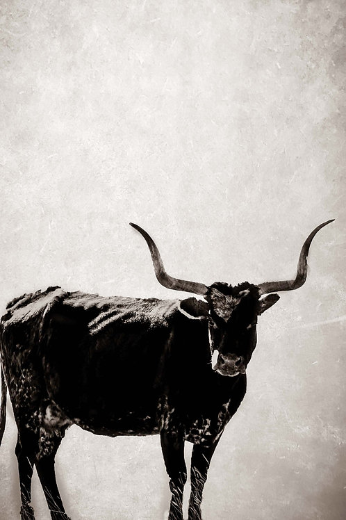 Longhorn Lady