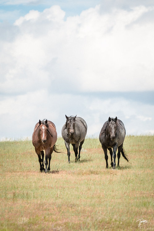 Mares of Summer