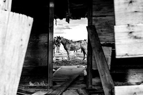 Homestead Horses