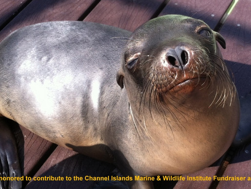 Compassion for the Channel Island Marine & Wildlife Institute