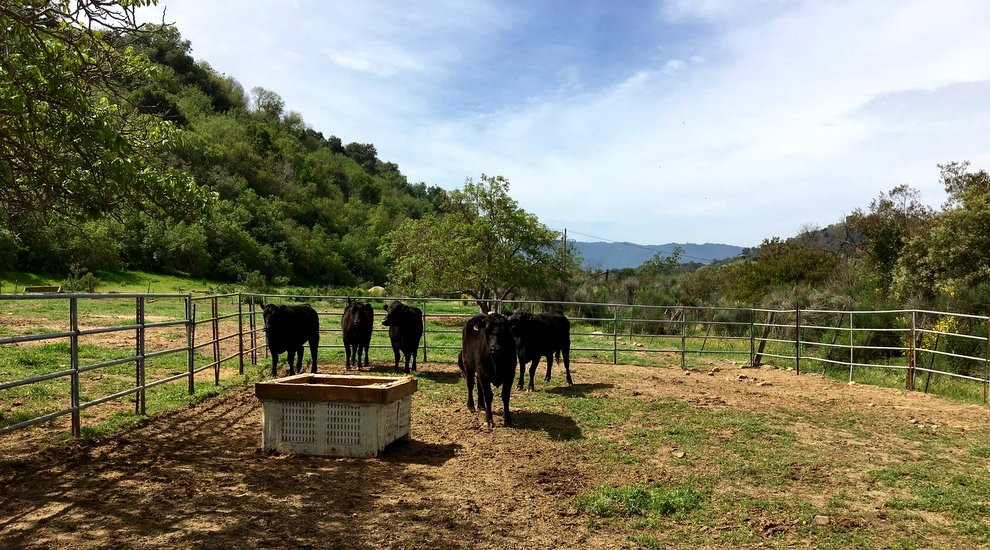 watkins ranch cattle farm