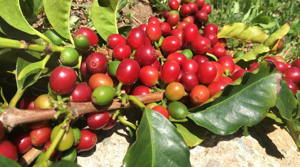 local organic coffee!