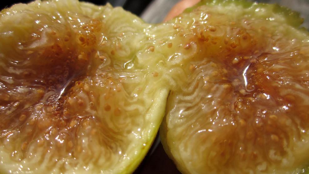now thats a ripe kadota fig!