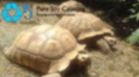 purejoycatering_compassion_turtles with