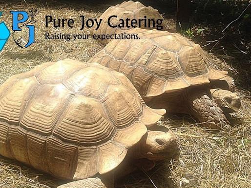 5 Ways Pure Joy Shows Compassion