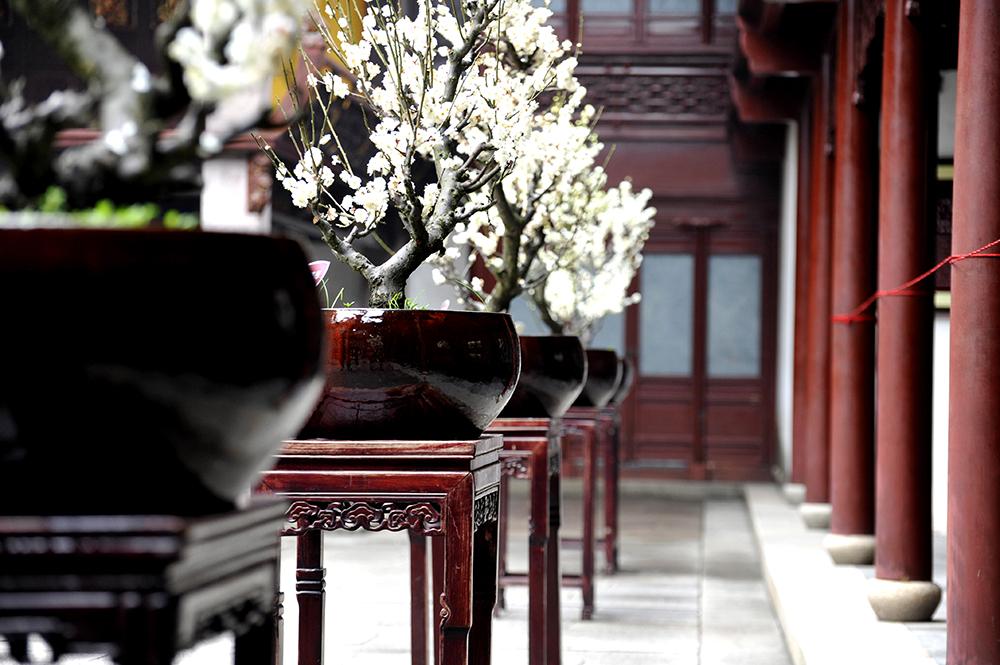 reportage-photo-en-chine-a-shanghai-25