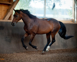 Horse and Physio Physiotherapeut Pfe