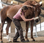 Horseandphysio-Physiotherapie-Pferd-Maud