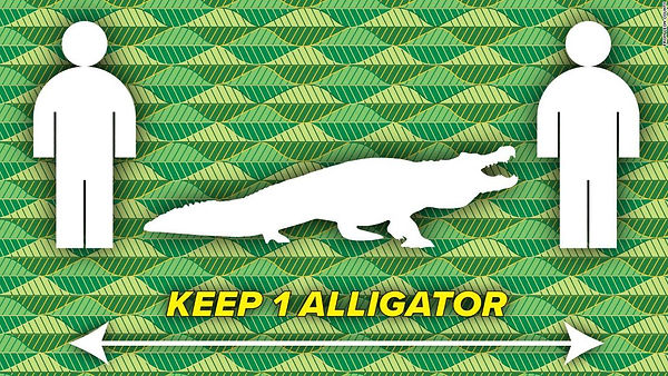 physical-distancing-florida-alligator.jp
